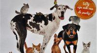 Gezellige beestenboel in het Grand Cafe van de Hoge Es. Donderdag 4 oktober is het dierendag en wordt het op De Hoge Es een gezellige beestenboel. Iedereen die een kleindier […]